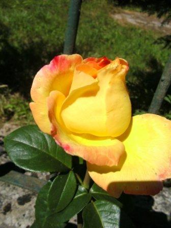 roseamitiechristina.jpg