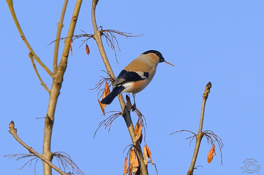 Les oiseaux ! dsc_1835